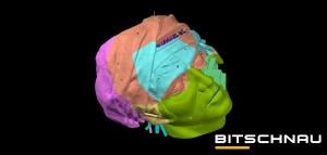 Advance Steel Modell Kopf mit Kaschur